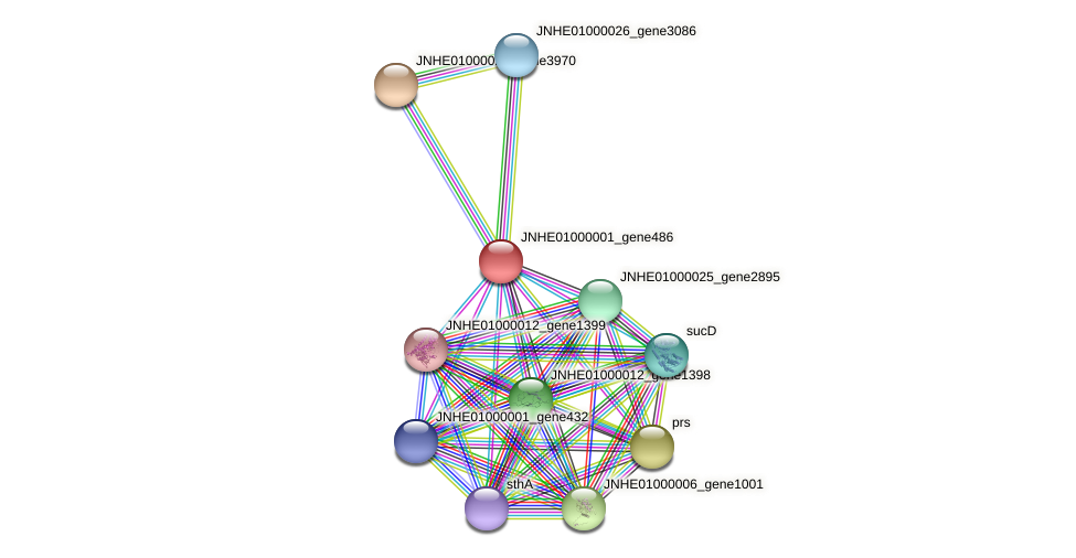JNHE01000001_gene486 protein (Pseudomonas oleovorans) - STRING interaction network