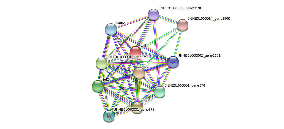 tolB protein (Pseudomonas oleovorans) - STRING interaction network