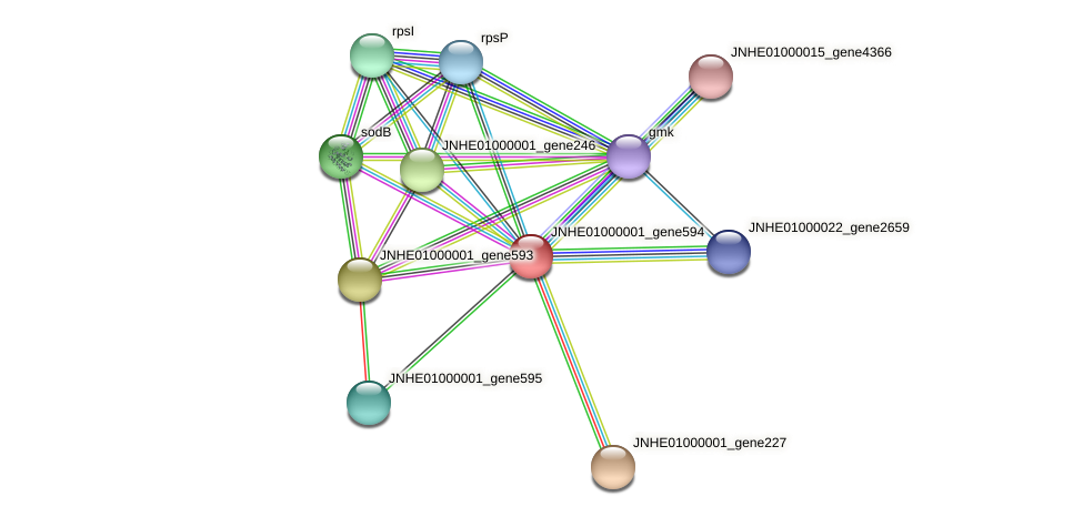 JNHE01000001_gene594 protein (Pseudomonas oleovorans) - STRING interaction network