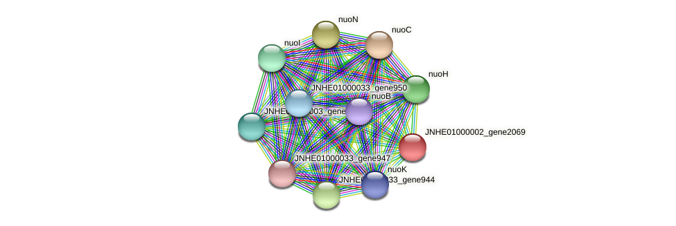 JNHE01000002_gene2069 protein (Pseudomonas oleovorans) - STRING interaction network