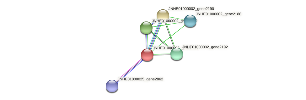 JNHE01000002_gene2191 protein (Pseudomonas oleovorans) - STRING interaction network