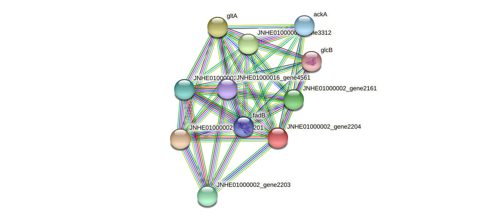 JNHE01000002_gene2204 protein (Pseudomonas oleovorans) - STRING interaction network