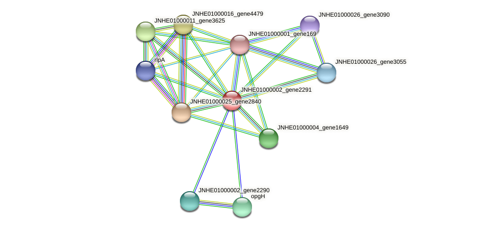 JNHE01000002_gene2291 protein (Pseudomonas oleovorans) - STRING interaction network