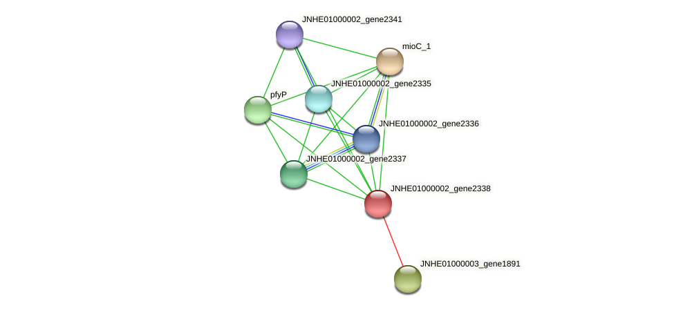 JNHE01000002_gene2338 protein (Pseudomonas oleovorans) - STRING interaction network