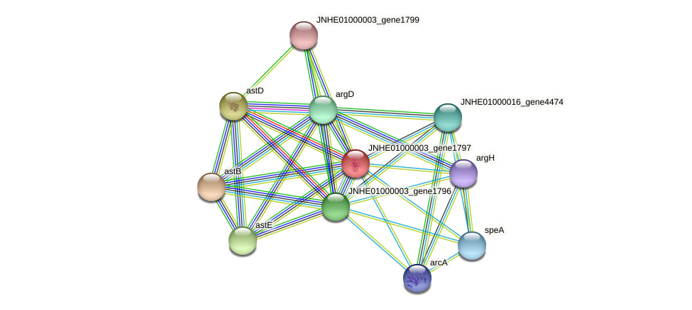 JNHE01000003_gene1797 protein (Pseudomonas oleovorans) - STRING interaction network