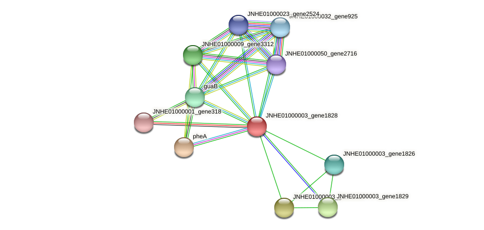 JNHE01000003_gene1828 protein (Pseudomonas oleovorans) - STRING interaction network