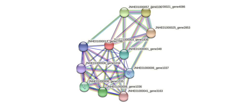 JNHE01000003_gene1836 protein (Pseudomonas oleovorans) - STRING interaction network