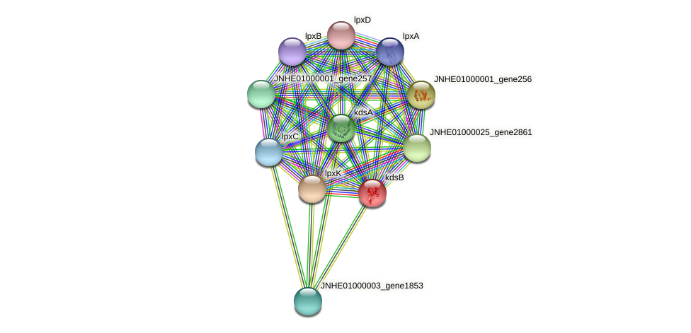 kdsB protein (Pseudomonas oleovorans) - STRING interaction network