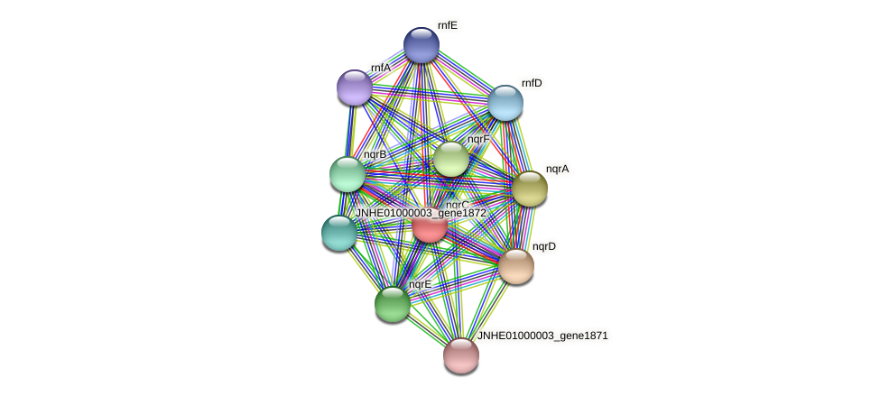JNHE01000003_gene1876 protein (Pseudomonas oleovorans) - STRING interaction network