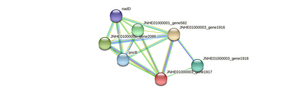 JNHE01000003_gene1917 protein (Pseudomonas oleovorans) - STRING interaction network