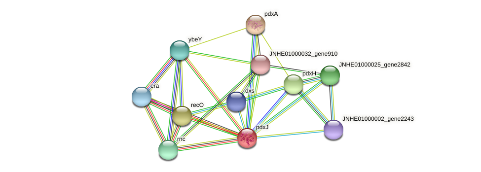 pdxJ protein (Pseudomonas oleovorans) - STRING interaction network