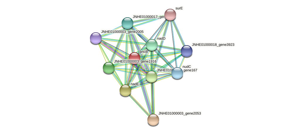 pncB protein (Pseudomonas oleovorans) - STRING interaction network