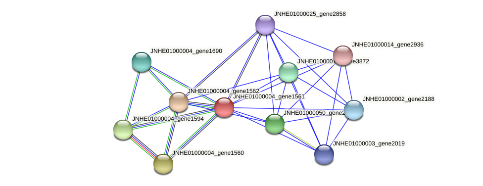 JNHE01000004_gene1561 protein (Pseudomonas oleovorans) - STRING interaction network