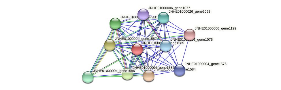 JNHE01000004_gene1585 protein (Pseudomonas oleovorans) - STRING interaction network