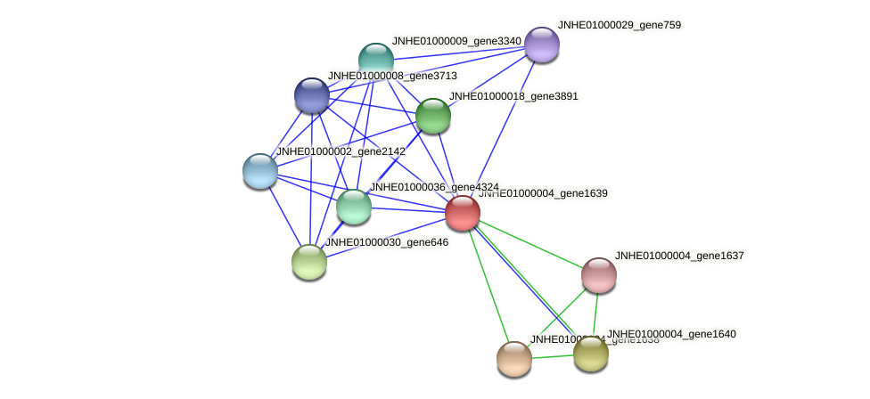JNHE01000004_gene1639 protein (Pseudomonas oleovorans) - STRING interaction network