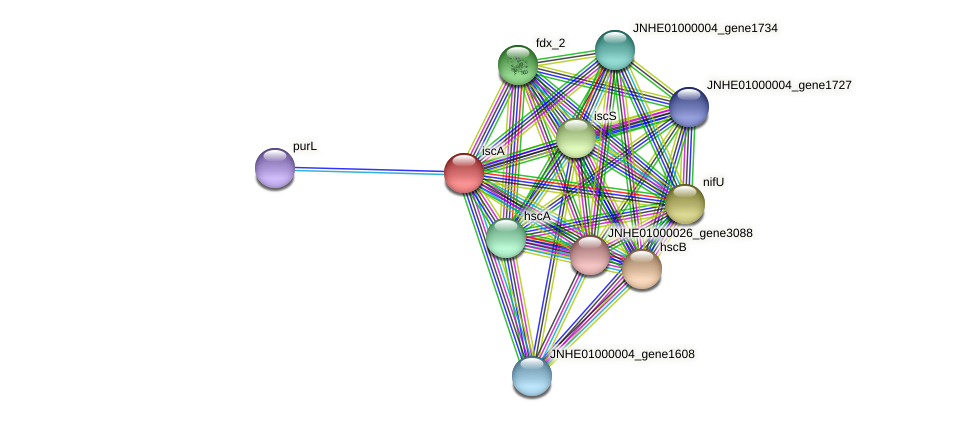 JNHE01000004_gene1731 protein (Pseudomonas oleovorans) - STRING interaction network