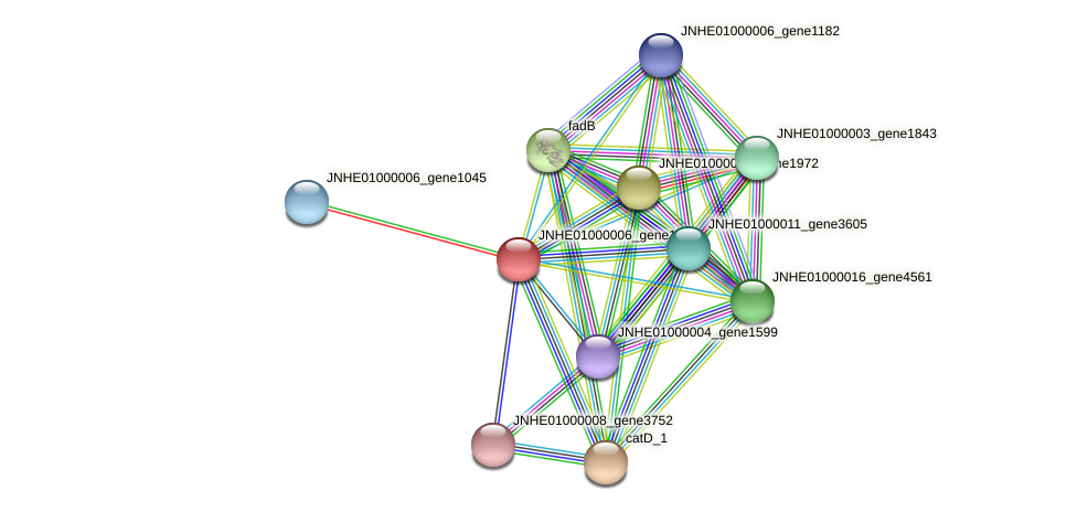 JNHE01000006_gene1051 protein (Pseudomonas oleovorans) - STRING interaction network