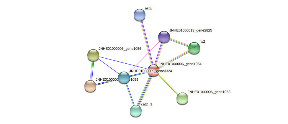 JNHE01000006_gene1054 protein (Pseudomonas oleovorans) - STRING interaction network