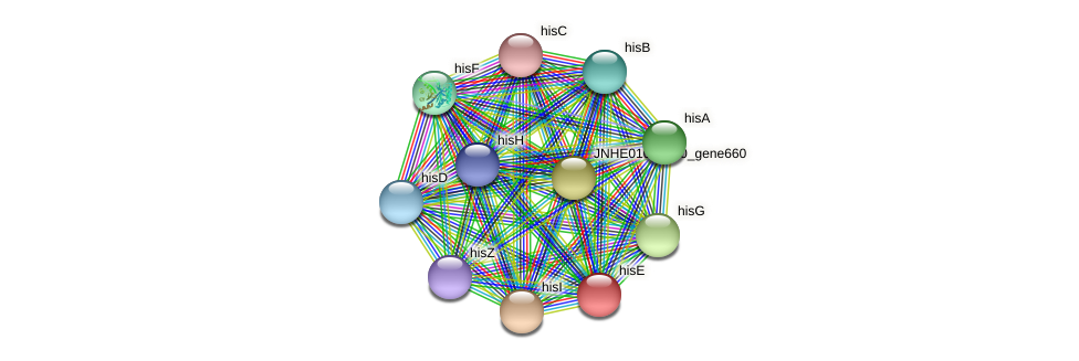 hisE protein (Pseudomonas oleovorans) - STRING interaction network