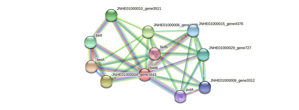 betB protein (Pseudomonas oleovorans) - STRING interaction network