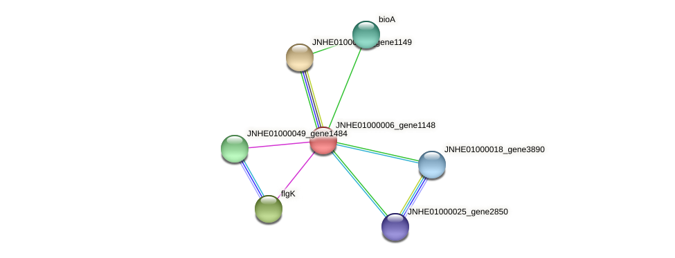 JNHE01000006_gene1148 protein (Pseudomonas oleovorans) - STRING interaction network