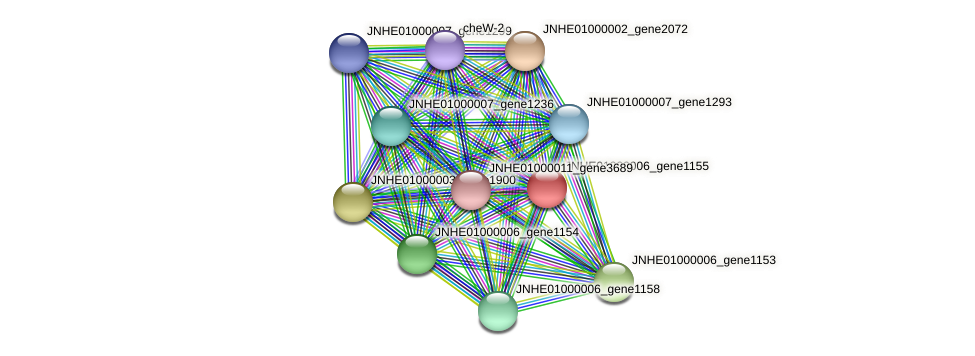 JNHE01000006_gene1155 protein (Pseudomonas oleovorans) - STRING interaction network