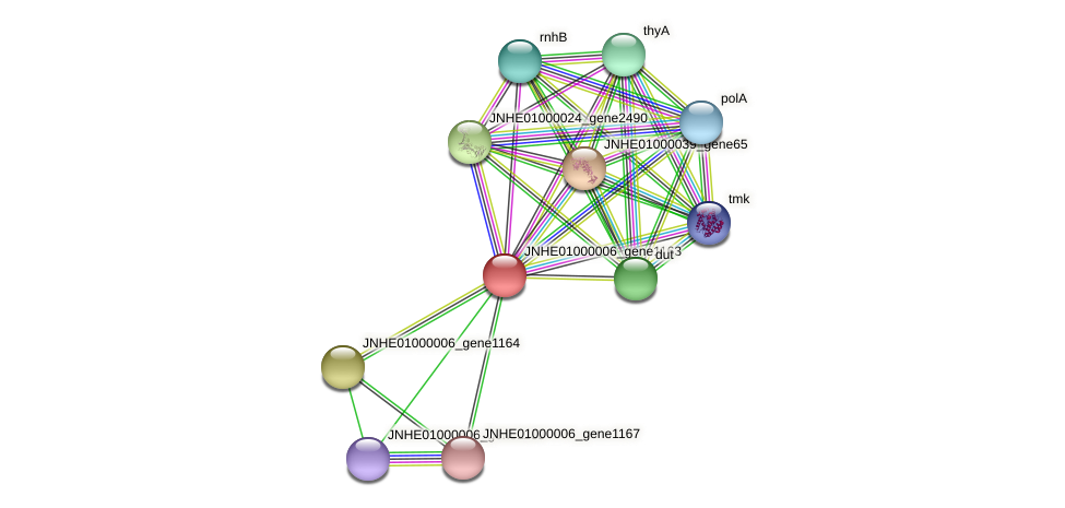 JNHE01000006_gene1163 protein (Pseudomonas oleovorans) - STRING interaction network