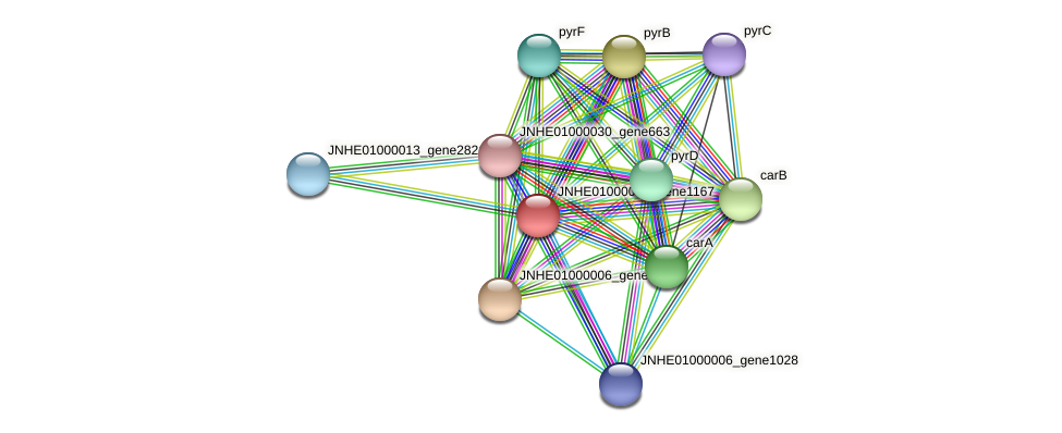 JNHE01000006_gene1167 protein (Pseudomonas oleovorans) - STRING interaction network