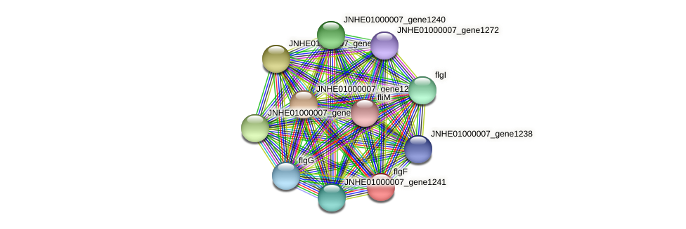 JNHE01000007_gene1242 protein (Pseudomonas oleovorans) - STRING interaction network