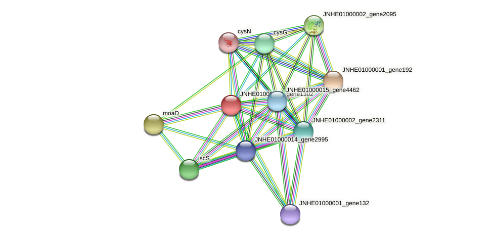 JNHE01000007_gene1302 protein (Pseudomonas oleovorans) - STRING interaction network