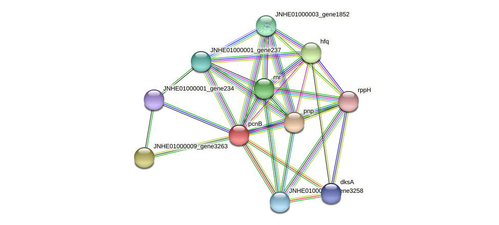 pcnB protein (Pseudomonas oleovorans) - STRING interaction network