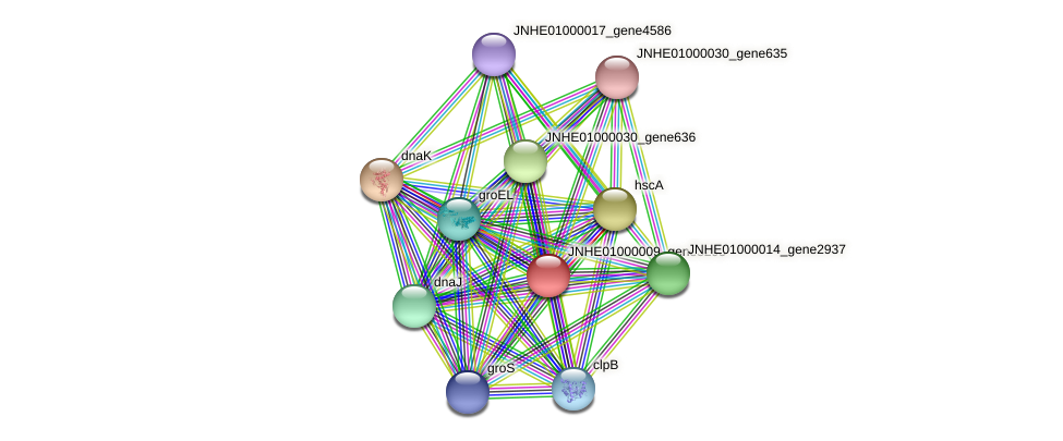 JNHE01000009_gene3295 protein (Pseudomonas oleovorans) - STRING interaction network
