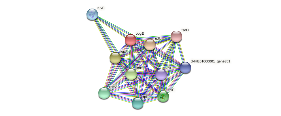 obg protein (Pseudomonas oleovorans) - STRING interaction network