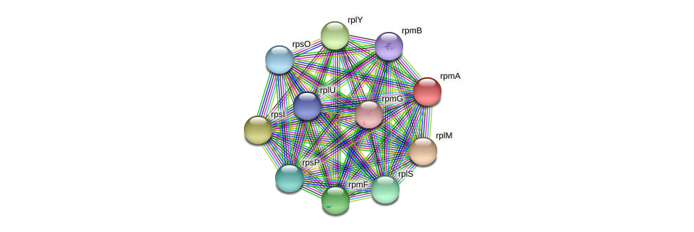 rpmA protein (Pseudomonas oleovorans) - STRING interaction network