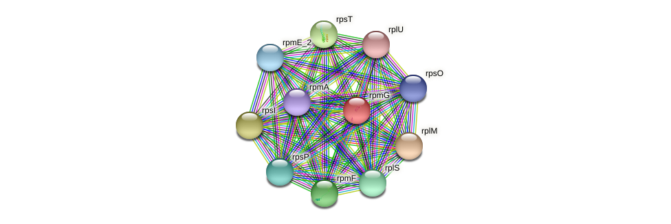 rpmG protein (Pseudomonas oleovorans) - STRING interaction network