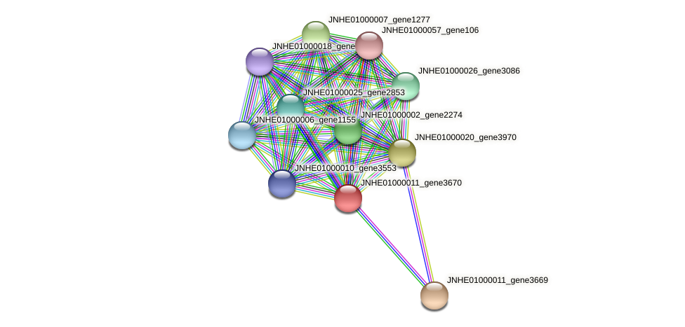 JNHE01000011_gene3670 protein (Pseudomonas oleovorans) - STRING interaction network