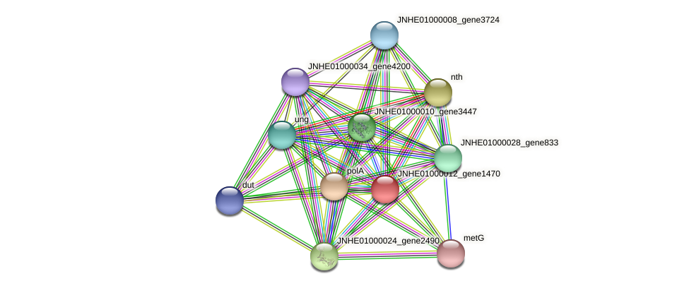 JNHE01000012_gene1470 protein (Pseudomonas oleovorans) - STRING interaction network