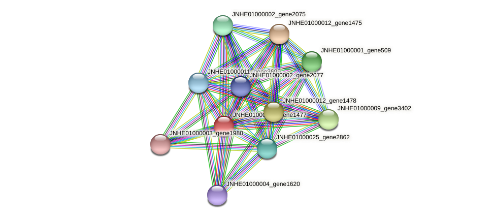 JNHE01000012_gene1477 protein (Pseudomonas oleovorans) - STRING interaction network