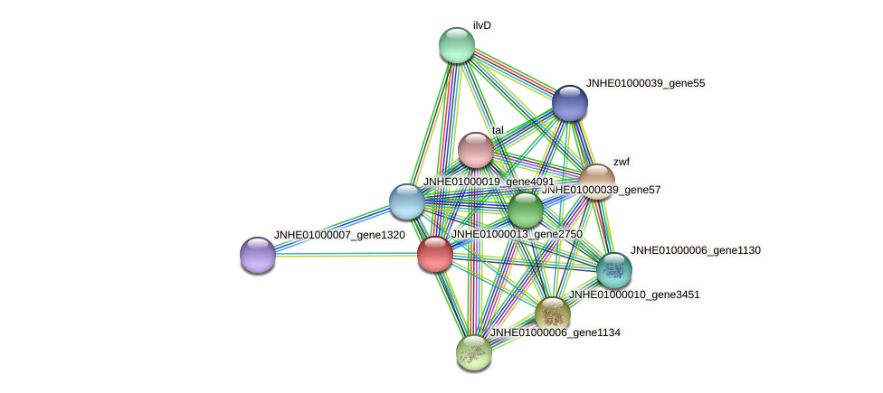 JNHE01000013_gene2750 protein (Pseudomonas oleovorans) - STRING interaction network
