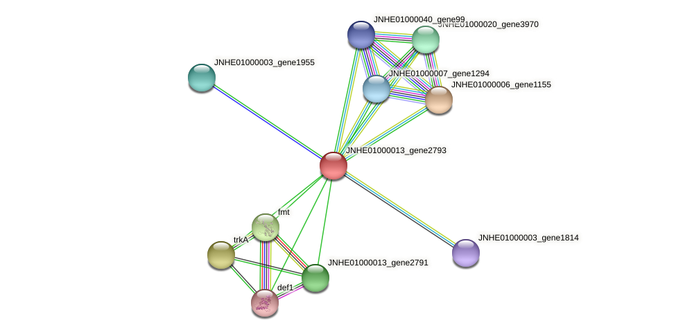 JNHE01000013_gene2793 protein (Pseudomonas oleovorans) - STRING interaction network