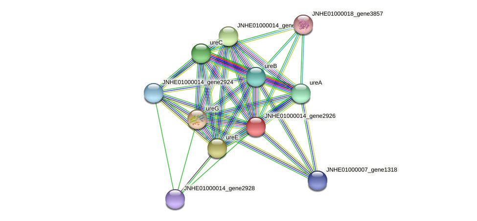 ureF protein (Pseudomonas oleovorans) - STRING interaction network