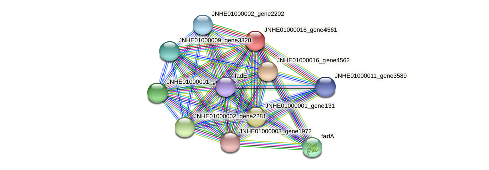 JNHE01000016_gene4561 protein (Pseudomonas oleovorans) - STRING interaction network