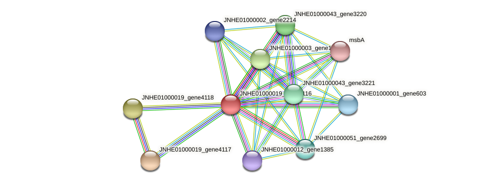 JNHE01000019_gene4116 protein (Pseudomonas oleovorans) - STRING interaction network