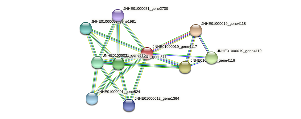 JNHE01000019_gene4117 protein (Pseudomonas oleovorans) - STRING interaction network