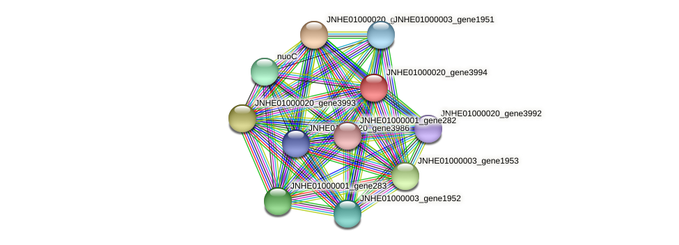 JNHE01000020_gene3994 protein (Pseudomonas oleovorans) - STRING interaction network
