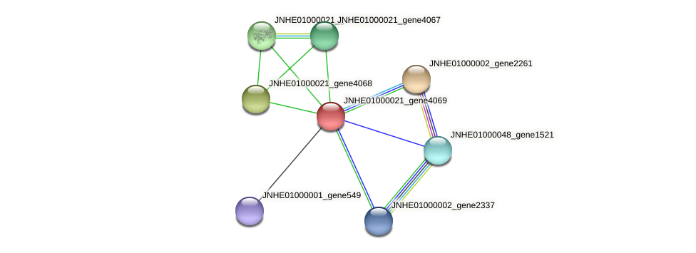 JNHE01000021_gene4069 protein (Pseudomonas oleovorans) - STRING interaction network