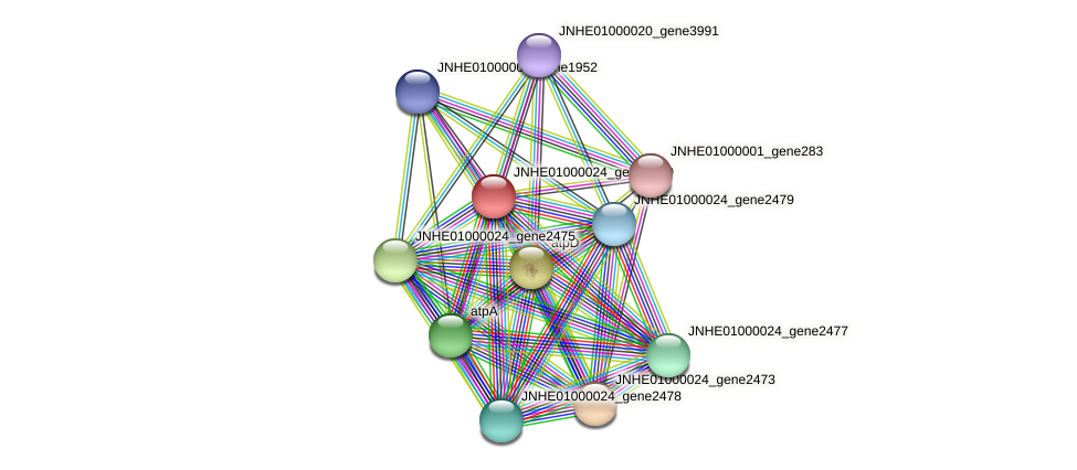 JNHE01000024_gene2480 protein (Pseudomonas oleovorans) - STRING interaction network