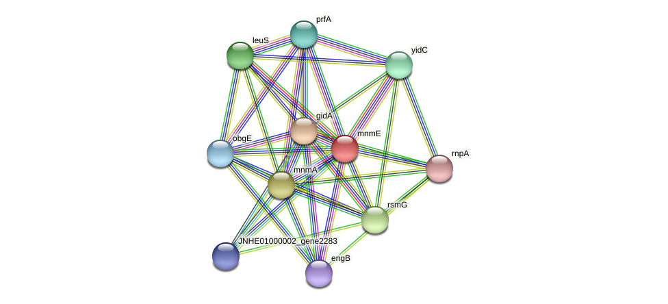 mnmE protein (Pseudomonas oleovorans) - STRING interaction network