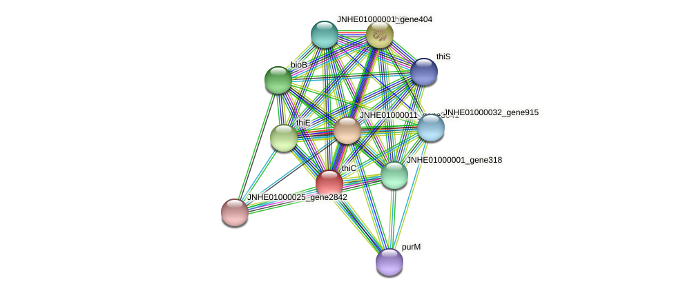 thiC protein (Pseudomonas oleovorans) - STRING interaction network