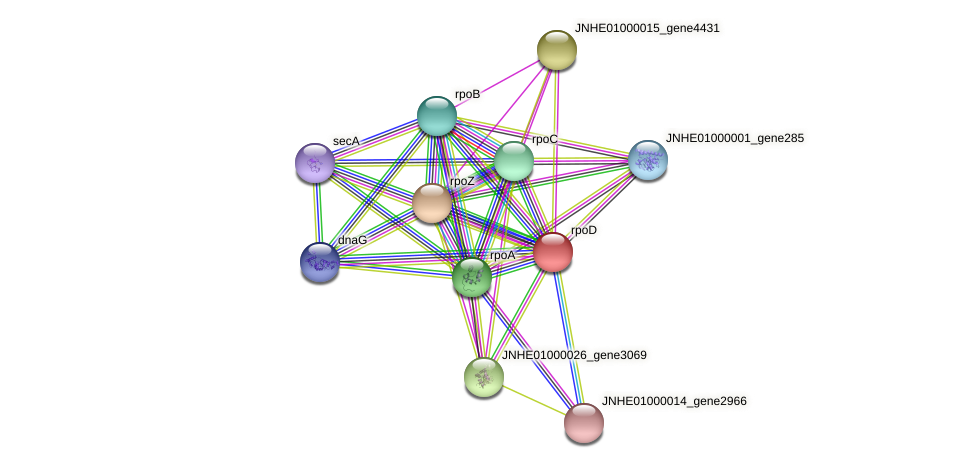 rpoD protein (Pseudomonas oleovorans) - STRING interaction network